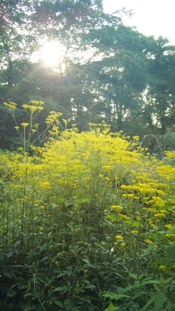 北軽井沢の癒し系の木や花‥☆